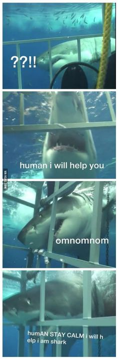 Sharks aren't always bad..why am i laughing so hard at this