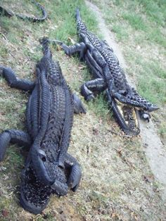 Crocodiles made with used tyres, inner tubes and recycled materials by Maison Ròde.  #art #crocodiles #upcylced #ecoart