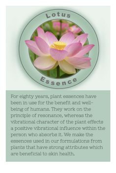 #FlowerEssences #HolyGrail #IndieBeauty #HolisticHealth #Lotus #NonotoxicSkincare #GreenBeauty #CleanSkincare #SkincareInnovation #ExoticPlantEssences #SkinDressing