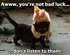 Funny Animals. Awwww, you're not bad luck, don't listen to them! Orange cats really are this sweet with their loved ones...