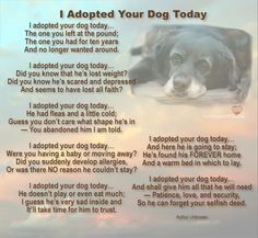 This is so sad but true. So many people get dogs who are temporary when in fact a dog should be permanent.