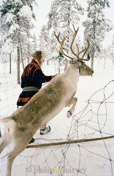 Sami reindeer herder dressed in Gakti, traditional dress, Lapland, Sweden    Copyright; Philip Lee Harvey