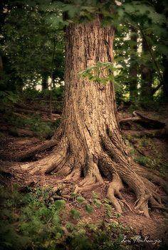 """""""All things must come to the soul from its roots, from where it is planted. '  ~ Saint Teresa of Avila"""