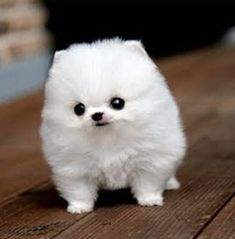 I'm not a stuffed animal. Just the cutest thing you've ever seen!