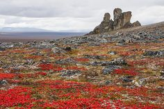 Did you know Bering Land Bridge National Preserve, Alaska, is one of the 10 least-visited places in the National Park System? You should visit all 10!