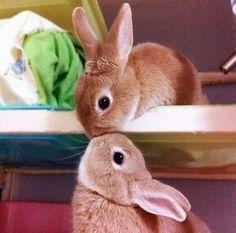 The Cute Bunny Kiss