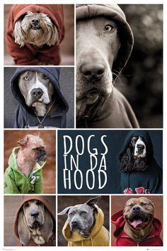 Poster: Dogs in the Hood - dogs zum Verkauf online. Bestellen Sie Ihre Poster, Ihre 3D Film-Poster oder ähnliches interessantes Maxi Poster