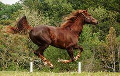 cavalo a galope