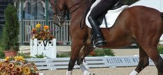 GGT horse arena footing is widely used at international horse show facilities featuring jumping and dressage events. http://ggtfooting.net/