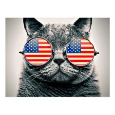 Funny cat USA flag glasses Independence day photo Postcard