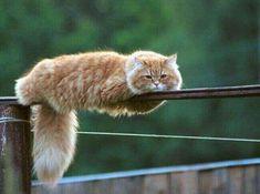 """Résultat de recherche d'images pour """"chat a l'attitude amusante"""""""