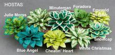 Many types of Hostas
