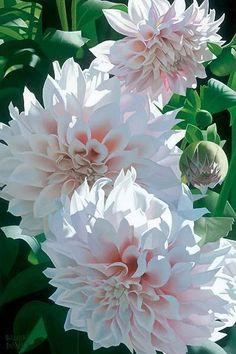 White and Pink Dahlias ~    Inspirations | Bride & Groom