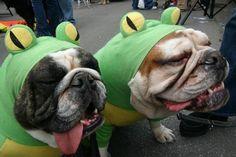bullfrogs!! xD