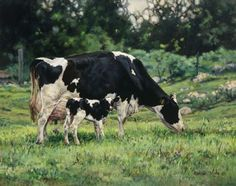 47 Ideas For Dairy Cattle Drawing Farm Animals, Animals And Pets, Cute Animals, Cow Pictures, Dairy Cattle, Nature Artists, Farm Art, Cow Painting, Cow Art
