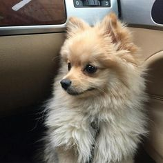 Image about cute in dogs by Charlotte on We Heart It Fluffy Animals, Animals And Pets, Baby Animals, Cute Animals, I Love Dogs, Cute Dogs, Cute Creatures, Funny Animal Pictures, Dog Photos
