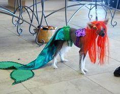 Little Mermaid Dog & Zoey the Chihuahua as Mermaid | Pinterest | Mermaid Dog and Sweet girls