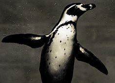 Photo du GEOnaute : daski Trouvez la meilleure assurance pour votre animal de compagnie grâce à ce comparateur en ligne