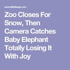 Zoo Closes For Snow, Then Camera Catches Baby Elephant Totally Losing It With Joy