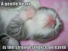 A gentle ♥ is the strongest firce on earth