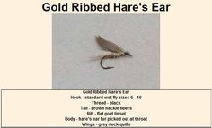 Gold Ribbed Hare's Ear