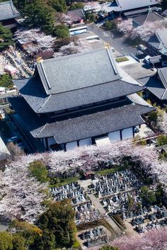 Tokyo - Zojoji Temple, sakura, Japan