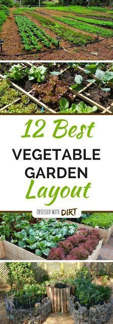 12 Ways To Grow a Successful Vegetable Garden.. Designing the perfect vegetable garden layout isnt easy. There are so many things to consider! Your vegetables will need a lot of sun, water, nutrients and loving care to grow..