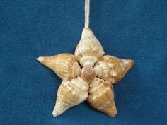 Sea Shell Star Ornament.