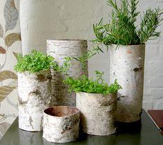 birch tubes