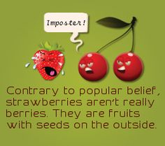 List of Different Types of Berries