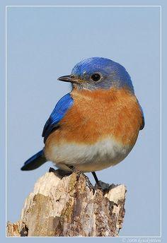 Lovely Colourful Bird....♥