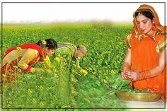 ਸਰ੍ਹੋਂ ਦੇ ਸਾਗ ਨੂੰ ਬਣਾਉਣ ਲੱਗਿਆਂ ਜਿੰਨੀ ਮਿਹਨਤ ਲੱਗਦੀ ਆ, ਫਿਰ ਉਹਤੋਂ ਦੁਗਨਾ ਸੁਆਦ ਖਾਣ ਲੱਗਿਆਂ ਆਉਂਦਾ ਕਿਹਨੂੰ ਕਿਹਨੂੰ ਪਸੰਦ ਆ ਸਾਗ ਫਿਰ? #PunjabiFoodSwag #punjabi #sikhvoices Punjabi Culture, Punjabi Food, Puns, The Voice, Outdoor, Clean Puns, Outdoors, Outdoor Games, Funny Puns