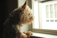How to Ease Your Dog's Separation Anxiety