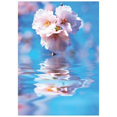 Blossom #postcards