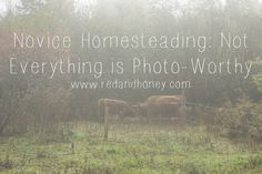 Novice Homesteading: Not Everything is Photo-Worthy (a great read on the realities of the seemingly idyllic farm life that so many aspire to...