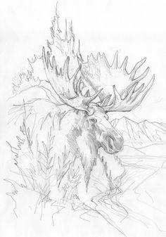 Bergsma Gallery Press::Paintings::Originals::Original Sketches::2014/Moose - Original Sketch