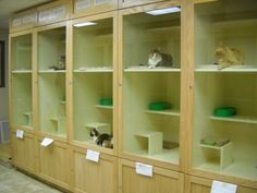 Humane Society of the High Plains Cat Condos - I like how roomy they are!