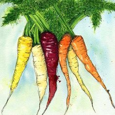 """Print of an Original Watercolor and Ink Painting """"Rainbow Carrots"""""""
