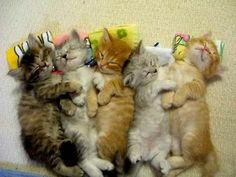 lotsa pics of cute kittens