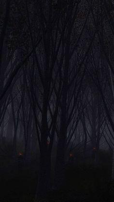 [50+] Forest IPhone Wallpaper On WallpaperSafari