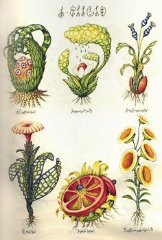 Codex Seraphinianus, an illustrated encyclopaedia of a mystical and as yet undiscovered world. It's actually the work of Luigi Serafini a noted Italian artist and industrial designer and it was first published in 1981 Art And Illustration, Botanical Illustration, Botanical Drawings, Botanical Prints, The Stranger Book, Codex Seraphinianus, Illustration Botanique, Italian Artist, Art Forms