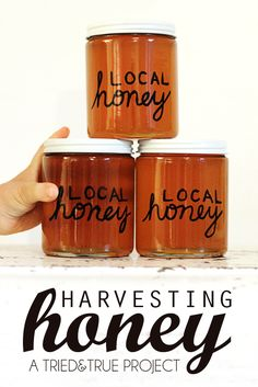 Harvesting Honey on the Cheap! #beekeeping #homesteading