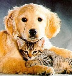 50 Best Dogs And Cats Together Images Dogs Cats Dog Cat