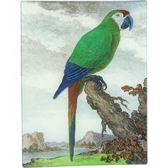 John Derian Company Inc — L'Ara Parrot