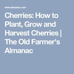 Cherries: How to Plant, Grow and Harvest Cherries | The Old Farmer's Almanac