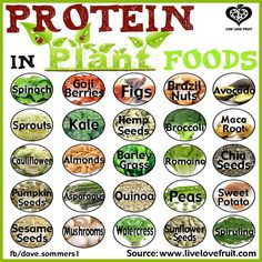 Proteine in plant foods