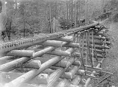 Log bridge (crib trestle) on the Columbia and Nehalem Valley Railroad, Columbia County, Oregon | John Fletcher Ford