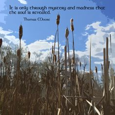 """It is only through mystery and madness that the soul is revealed."" ―Thomas Moore   Photo/artwork: Cattails in a pond, Hastings, Michigan. 2015."