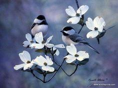Russell Cobane Springtime Chickadees | WildlifePrints.com
