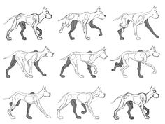 dog walkcycel